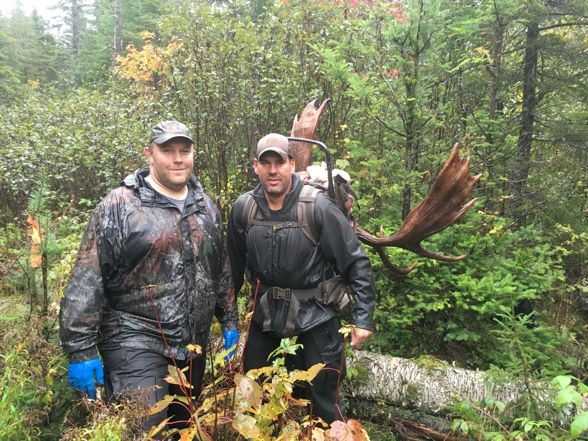Moose hunting permits maine ifw autos post for Maine fishing license